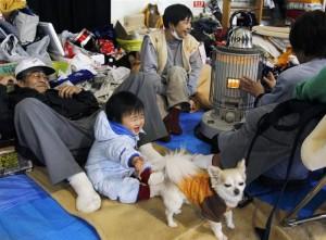 避難所のペット