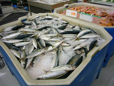 日本でも良く見る魚