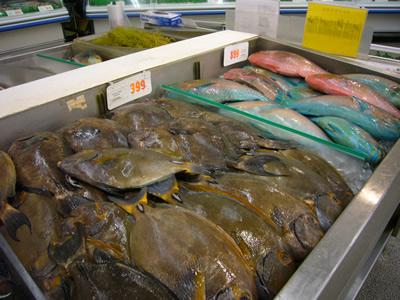 日本では良く見ない魚