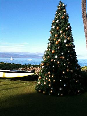 ホエラーズビレッジのクリスマスツリー