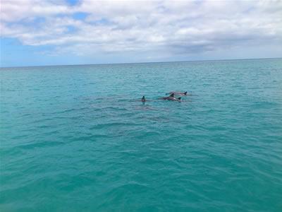 イルカがたくさん