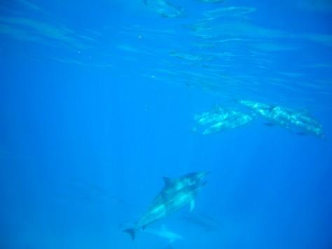 水面近くを泳ぐイルカたち