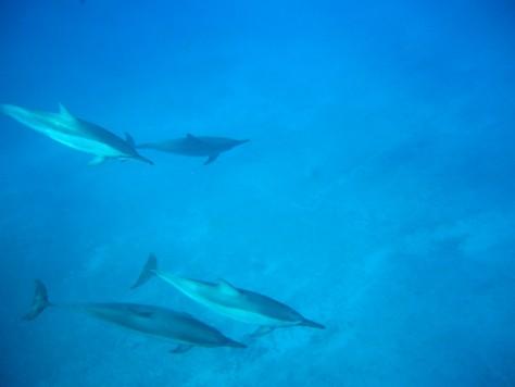 今度は海底を高速水泳