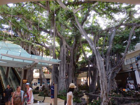 バニヤンツリー横エスカレーター