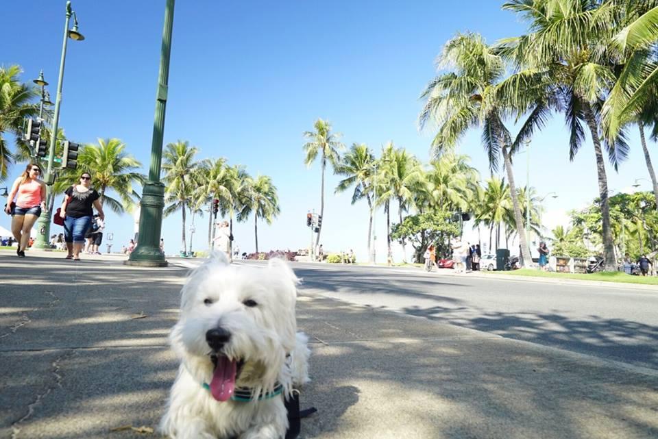 愛犬ペットとハワイに行く旅行