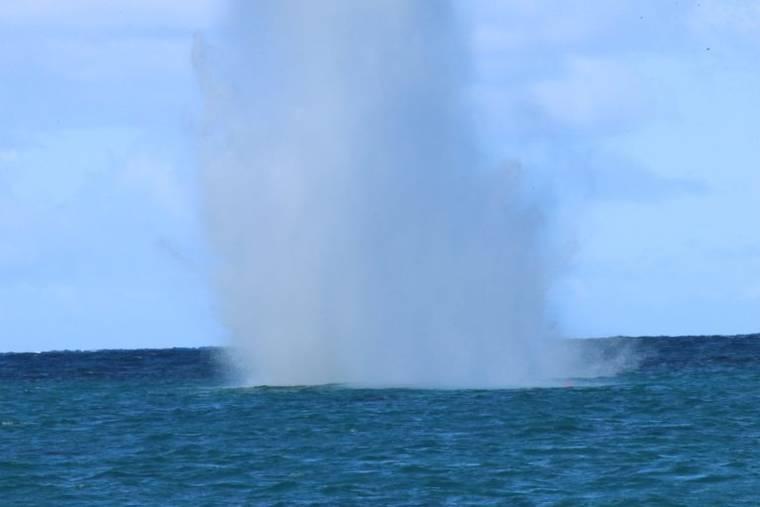 COURTESY Hawaii DLNR